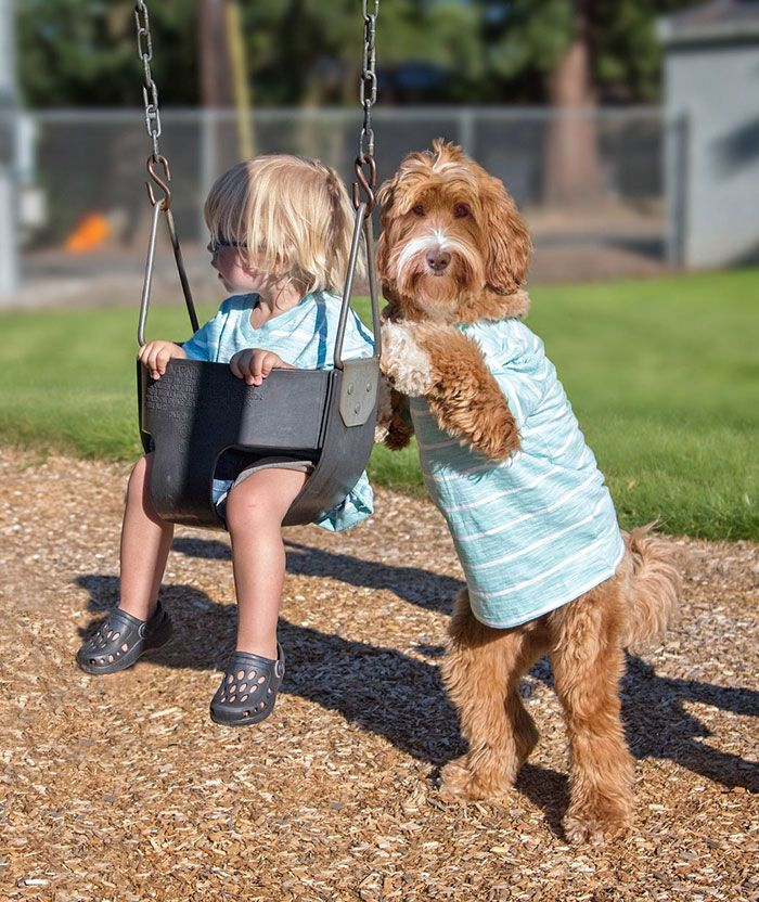 Adopted Labradoodle And His Boy Buddy Just Won The Internet