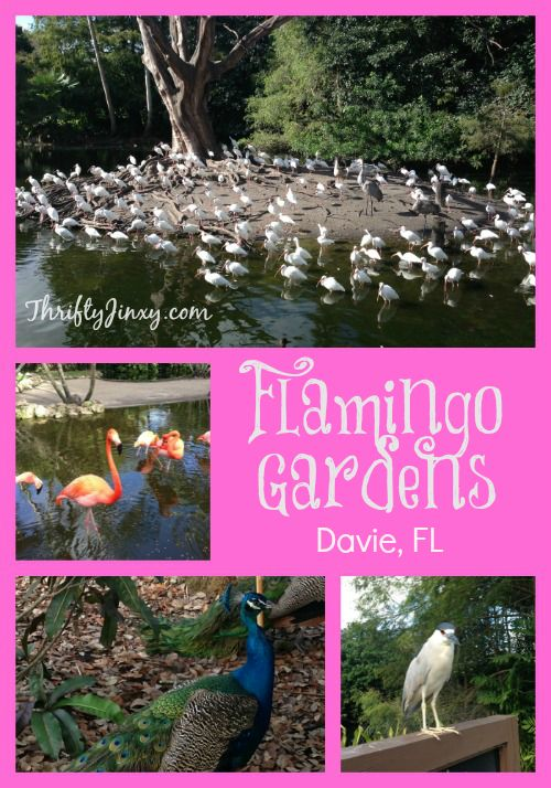 Flamingo Gardens – Davie, Florida If you find yourself visiting the Fort Lauderdale area, be sure to carve out some time to visit Flamingo Gardens. On a recent trip to visit my in-laws, we just happened to drive past Flamingo Gardens and wondered what it was. I quickly did some Googling and we decided to …