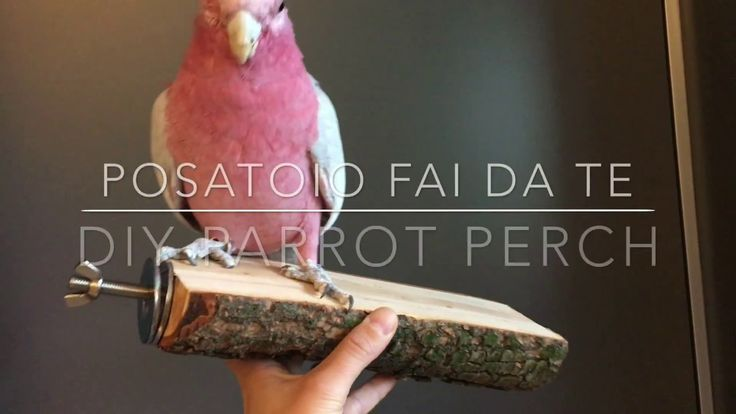 How to make DIY parrot perches using natural tree branches - YouTube