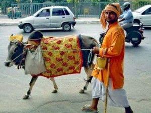 Но, к сожалению, в современной Индии, в некоторых районах, уважительное отношение к Корове-Матери можно встретить лишь в местах паломничества, и культура поклонения коровам, увы, утеряна…   Многие хозяева  выгоняют  постаревших животных на улицу,