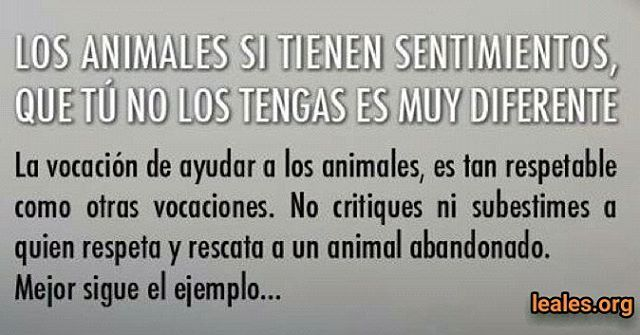 Respeta la vida...  #Difunde en #LealesOrg una #adopción y #adopta o sé #acogida para #AdoptaNoCompres O un #SeBusca de #perro o #gatos; #perdido o #encontrado para #NoAlMaltratoAnimal  https://www.instagram.com/p/BfbMxFFBFSo/ https://scontent.cdninstagram.com/vp/2089635e2cca3c41ff174e0322f16068/5B0862B2/t51.2885-15/s640x640/sh0.08/e35/28152554_159166034888219_3313068258088714240_n.jpg