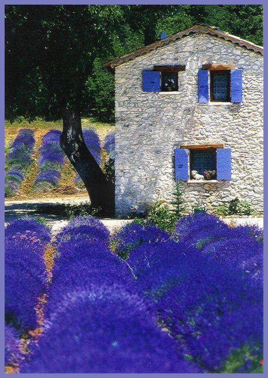 Provence: Lavender Fields, Color, Blue, Place, Photo, Oliver Thirion, Garden, Flower, Provence France
