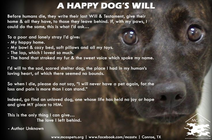 A Happy Dog's Last Will & Testament  ...This is the only thing I can give...the love I left behind.