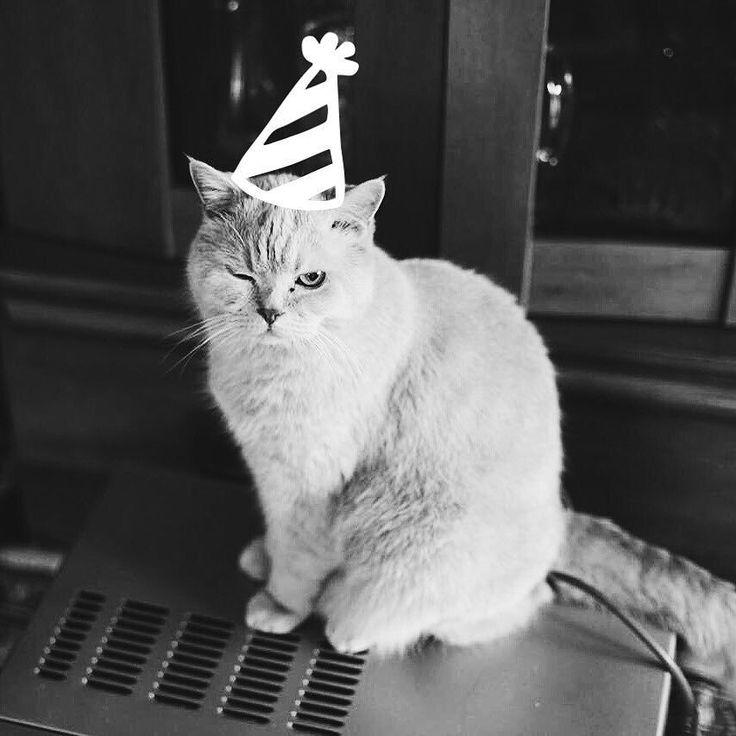 Сегодня день рождения самого старшего нашего питомца. У Марципана (на самом деле он Мартин) Sweet 16! Этого пушистого интеллигента я помню столько сколько помню себя. Всю мою более-менее сознательную жизнь он был с нами. Кто бы знал что будем праздновать его шестнадцатилетние . #деньрождения #birthday #cat #pet