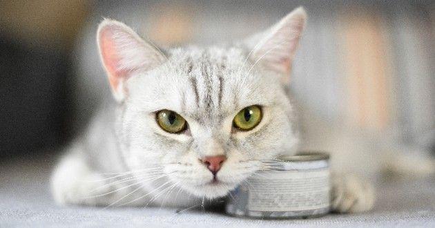 Quelle alimentation donner à un chat diabétique ?