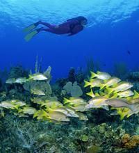 """Snorkeling in Saint Lucia   USA Today   """"Some of the best snorkeling on St. Lucia lies just off the Anse Chastenet Beach in the marine reserve of the same name. The coral reef there also is a popular shore diving site for scuba divers, but much of the top of the reef is in 25 feet of water and shallow enough for snorkeling and skin diving. Another beach snorkeling site is Anse la Raye Reef, also off the beach of the same name."""""""