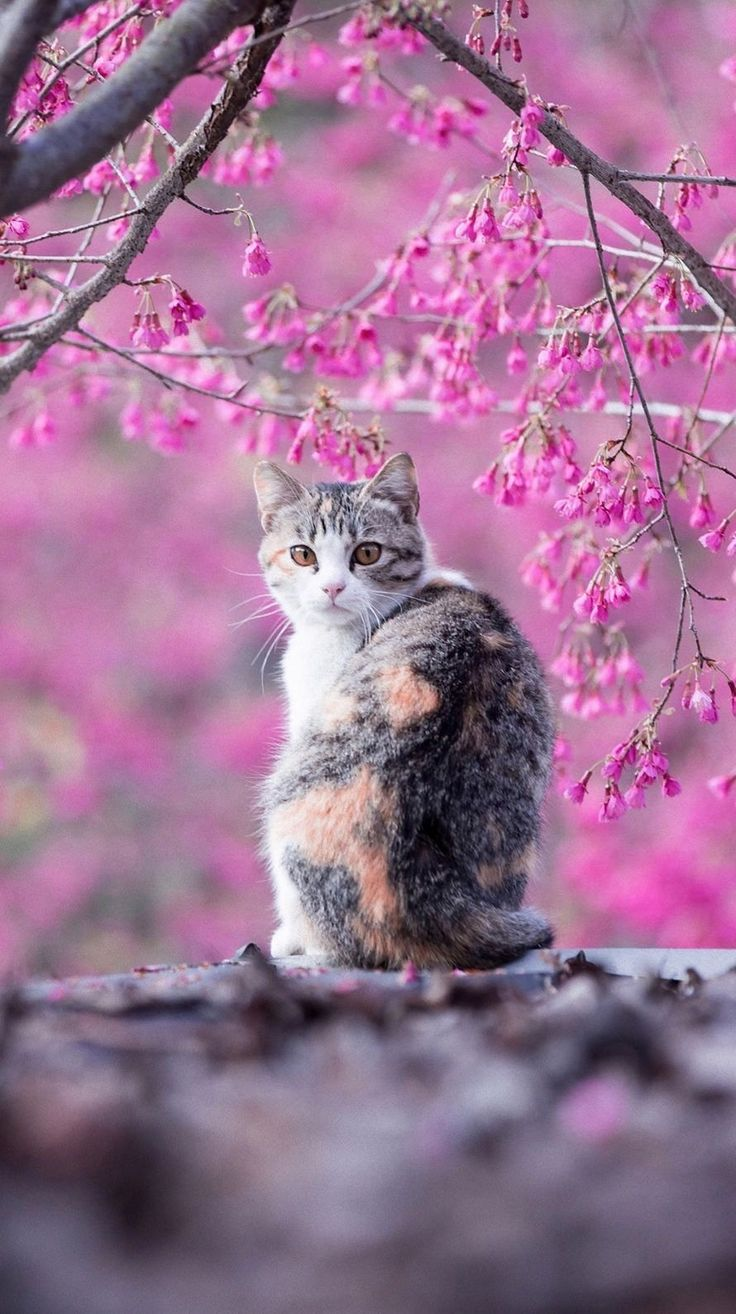 Beautiful Background and beautiful cat. It is a master piece don't you think?