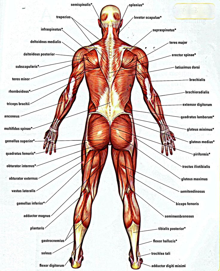 Mejores 530 imágenes de Anatomy Reference en Pinterest   Referencia ...