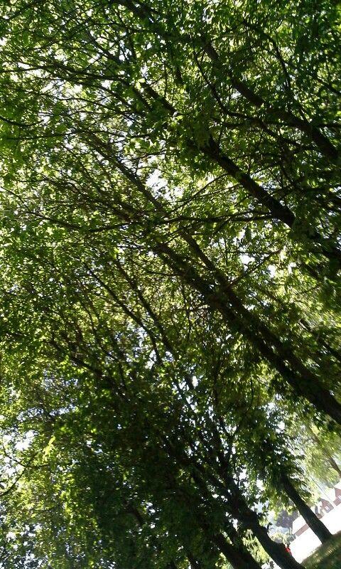 Bosque encantado 2