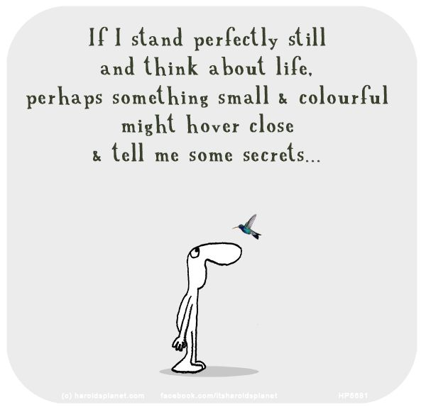 If I stand perfectly still and think about life, perhaps something small & colourful might hover close & tell me some secrets...