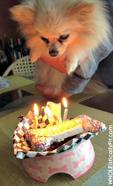 54 Best Pomeranian Birthday Images On Pinterest