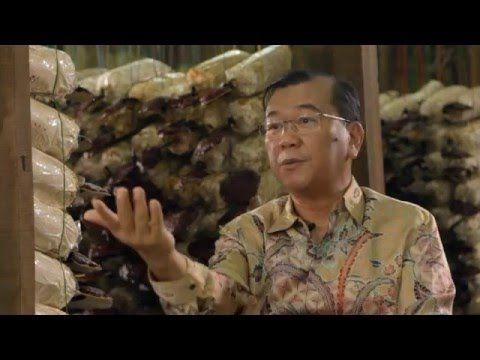 A ganoderma gyógyítja a testet, a test pedig a betegséget. Magyar szinkronnal Dato' Dr. Lim Siow Jin a DXN alapítójának és elnökének interjúja a Ganodermáról és a Spirulináról. http://marticafe.dxn.hu/termekek
