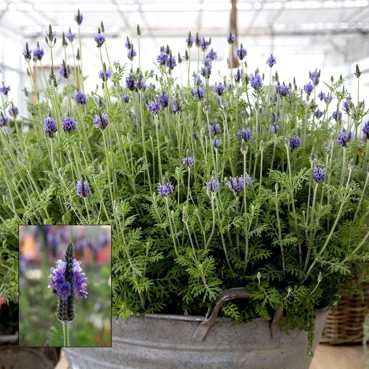 329 Best Herbs Images On Pinterest Chalkboard