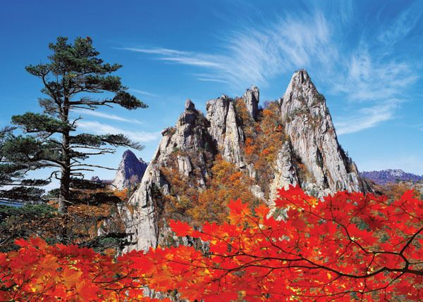 Autumn leaves of #Seoraksan National Park, #Sokcho, Korea
