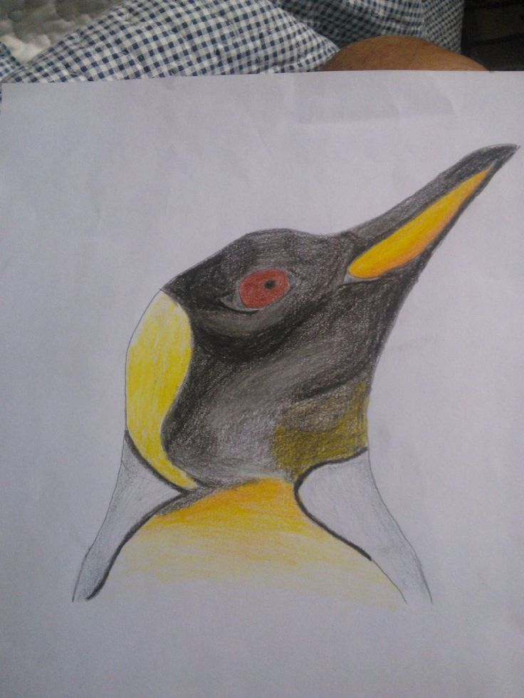 draw pinguino
