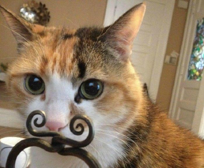 Кот - хипстер с модными усами.
