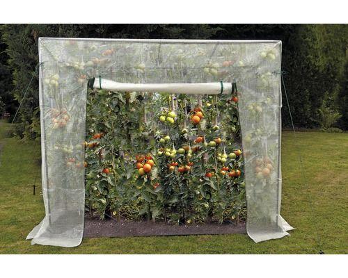 Tomatengewächshaus 200 x 77 cm, weiß bei HORNBACH kaufen
