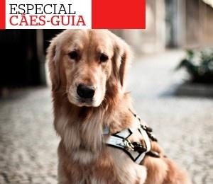 Especial cães-guia: O passo a passo do treinamento de cães-guia - http://glo.bo/WCxqoW