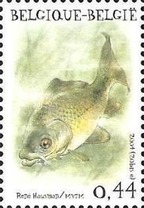Common Carp (Cyprinus carpio)
