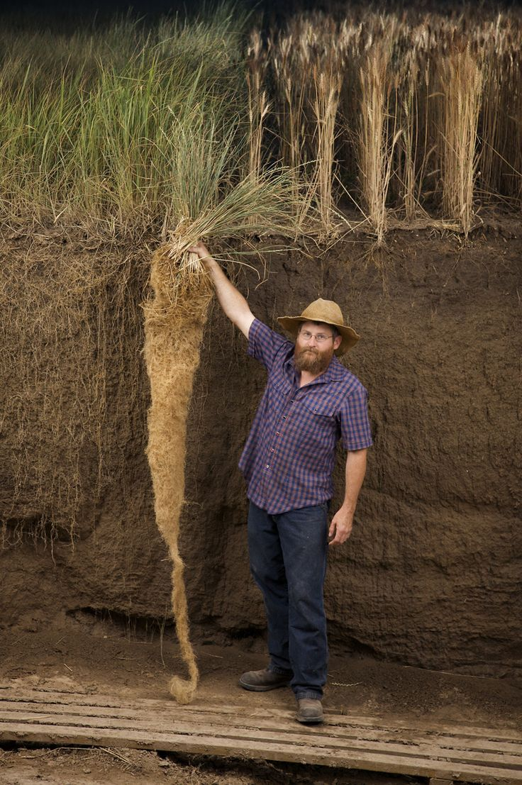 Excellent ideas for regenerative farming/gardening.