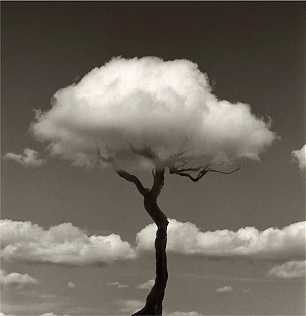 This type of photography is balance. It shows how the tree is centered and balanced. There isn't too much on one side.