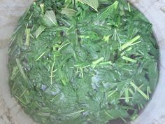 A Recipe for Nettle Dye (fabric, wool)