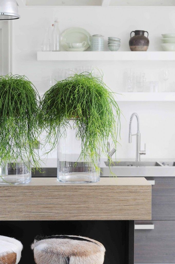 Trendy hanging over glass cylindrical vases :) Rhipsalis04_0954c298