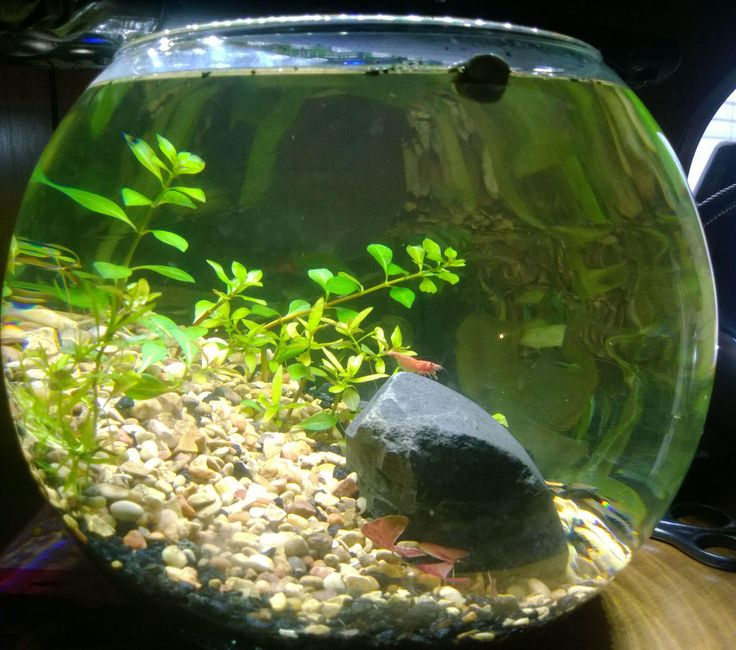 how to change the water in a small fish bowl