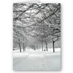 Lovely scene of snow touched tree branches intertwined over a pathway. Room for logo at bottom.