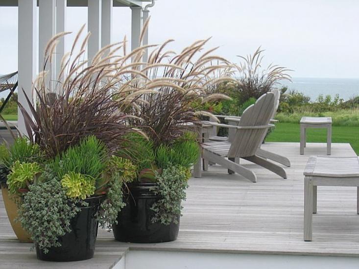 Big Pots Indoor Plants: Best 25+ Large Outdoor Planters Ideas On Pinterest