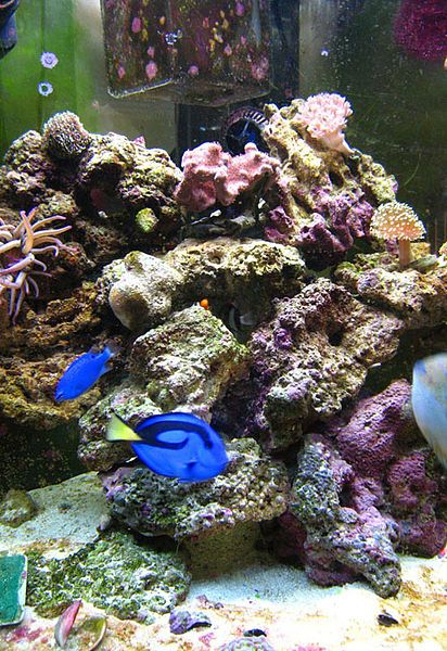 39 best salt water fish images on pinterest aquariums for Above water fish tank