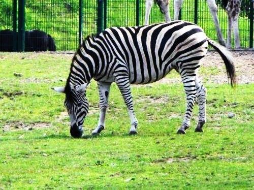 #zoo #gdansk #oliwa