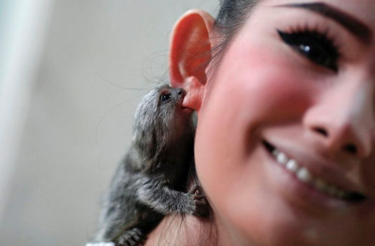 tiny animal nomming ear