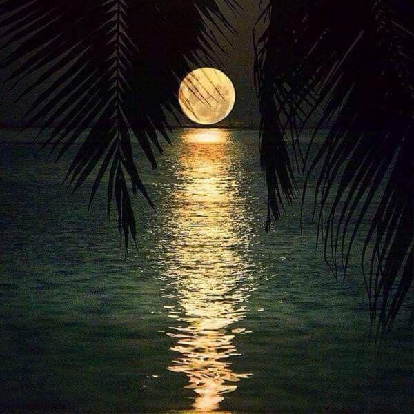 Reflejos de luna.