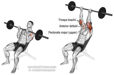 MUSCLE GAINS: Incline reverse grip barbell bench press. A compou...