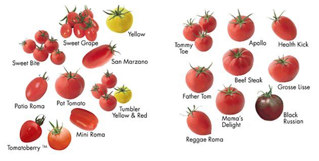 Types Of Tomato Google Search Types Of Potatoes