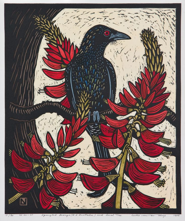 Leslie van der Sluys - Spangled Drongo (N.e Australia) and Coral Tree