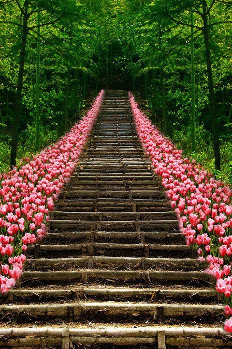 Tulip Stairs, Kyoto, Japan | via tumblr