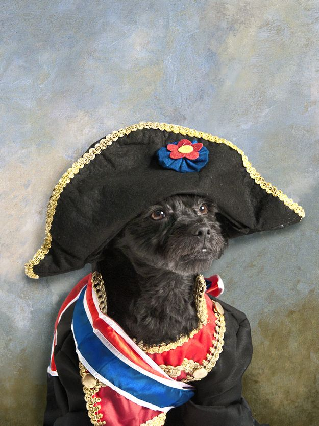 """Ten dogs with a Napoleon complex"" - http://www.buzzfeed.com/phildesignart/10-dogs-with-a-napoleon-complex-24mb"