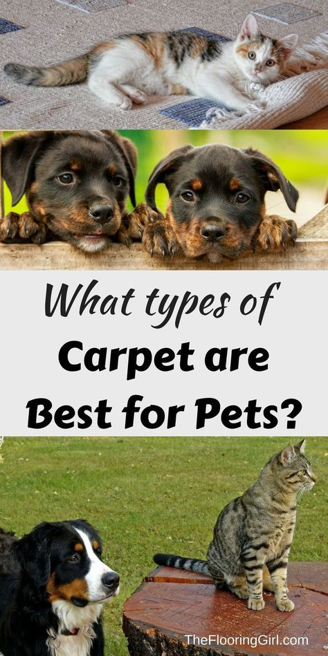 Best 25 Types of carpet ideas on Pinterest Carpet types Living