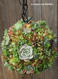 succulent topiary - Google Search