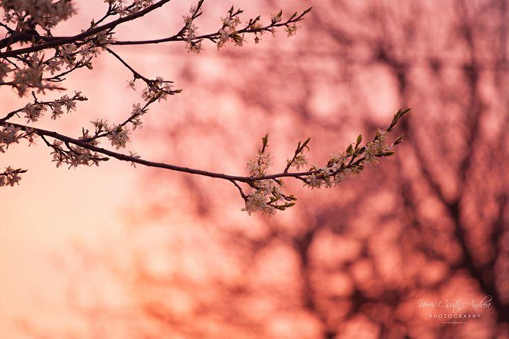 sunrise, pink, morning, colours, csutafoto