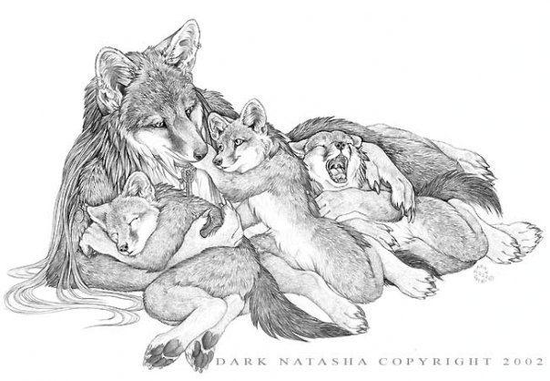 Волчица с волчатами картинка карандашом