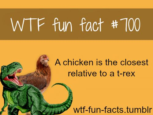 144 best images about Chicken Facts on Pinterest | The chicken, A ...