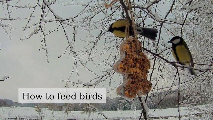 Jak karmić ptaki zimą (ładny, prosty karmnik dla ptaków)