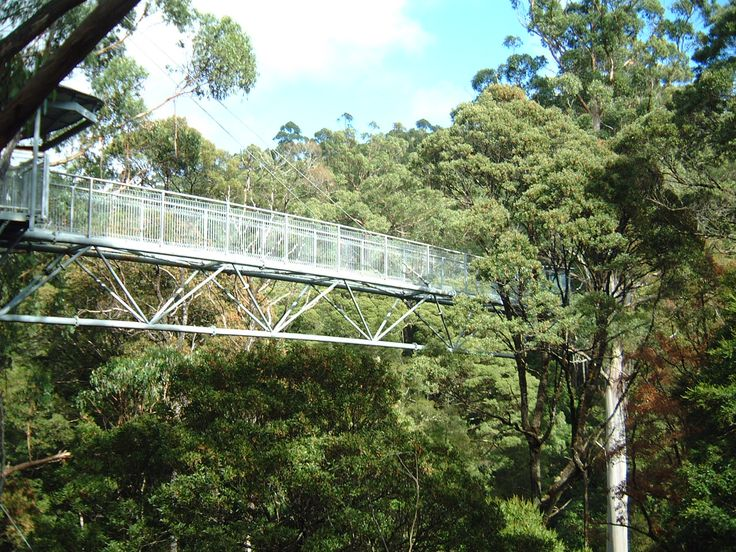 Fly tree top walk in Otway National Park. Photo by Rob Young Just Go Places | Share Travel Experience