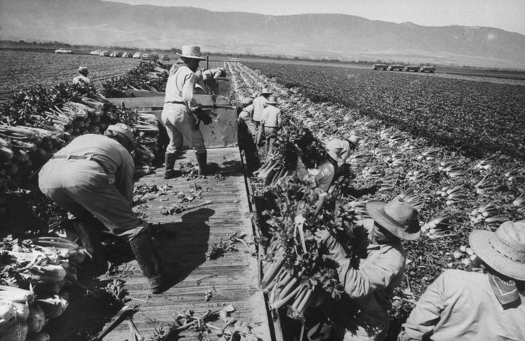Bitter Harvest Life With America 39 S Migrant Workers 1959