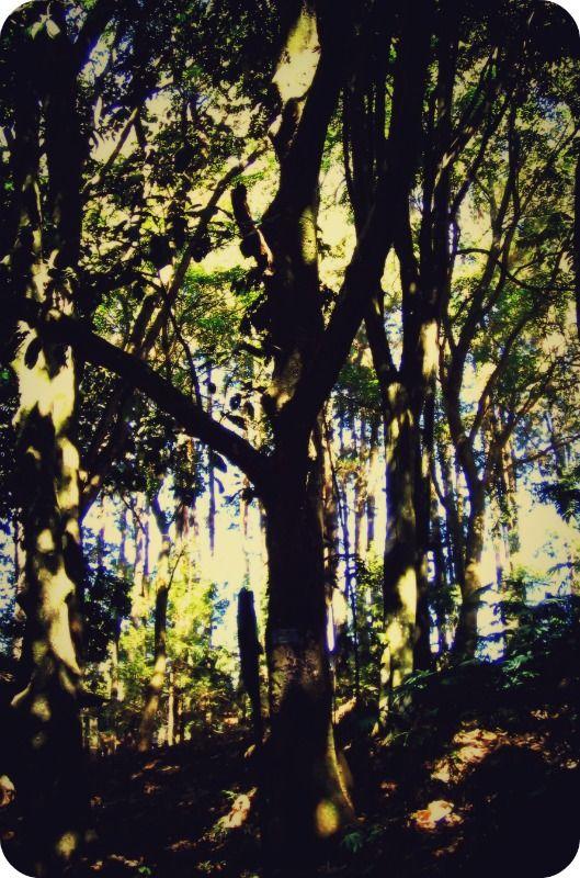 hutan dago - Bandung 2010