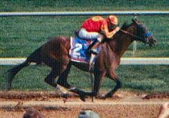 Real Quiet(1995)Quiet American- Really Blue By Believe It. 3x4 To Dr. Fager And Raise A Native, 4x5 To Cequillo, 4x5x5 To Rough N' Tumble, 5x5 To Nearco. 20 Starts 6 Wins 5 Seconds 6 Thirds. $3,271,802. Won 1998 Ky. Derby And Preakness. Missed Triple Crown By A Nose When Second In Belmont.