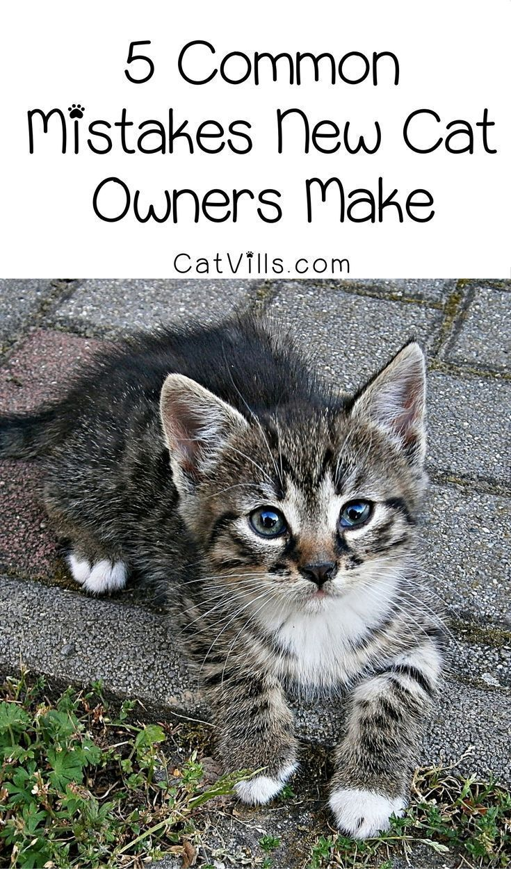 We All Want To Do Whats Best For Our Kitties And We All Make Mistakes Along The Way Learn From These 5 Most Common First Time Cat Owner Cat Training Cat Care